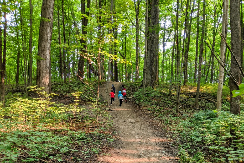 Embracing Your Means - rediscovering my why - walking in a forest